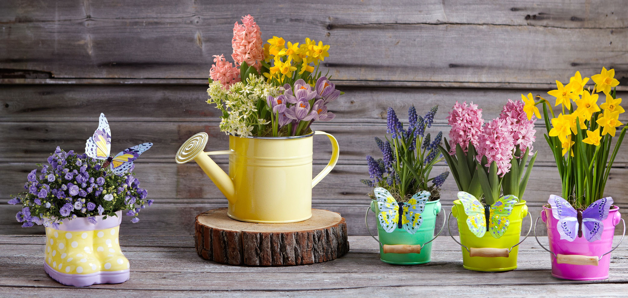 How to make the most of a small garden space 7 uncommon indoor plants
