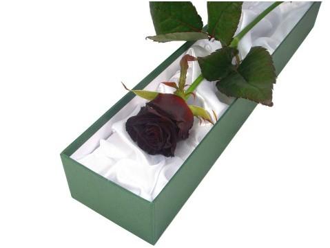 edited-black-rose