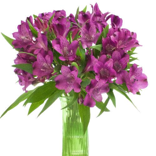 olimpia-purple-peruvian-lilies-bunch-500_e5a76587