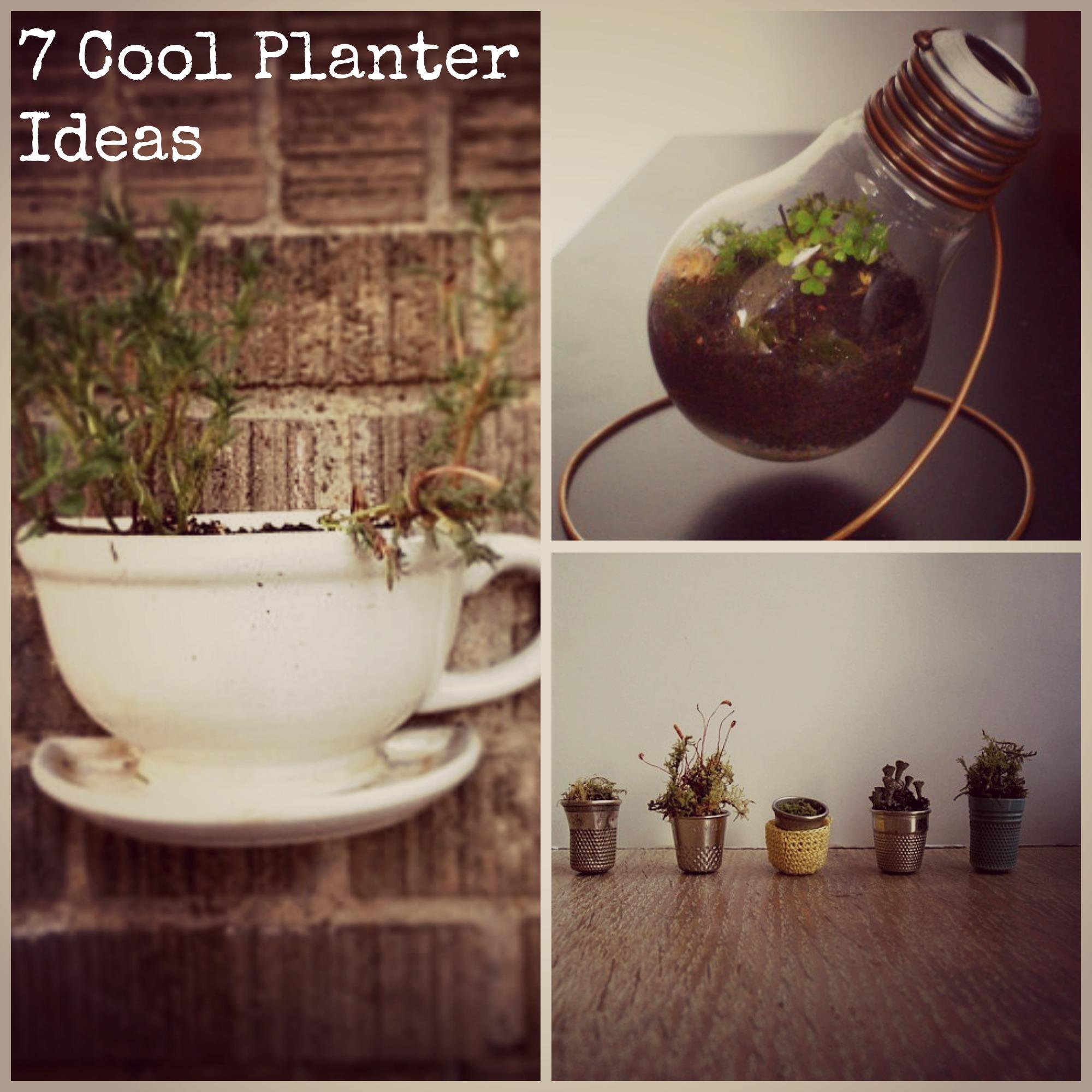 7 Trendy Plant Pot Ideas
