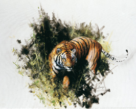 Sketch for the tiger