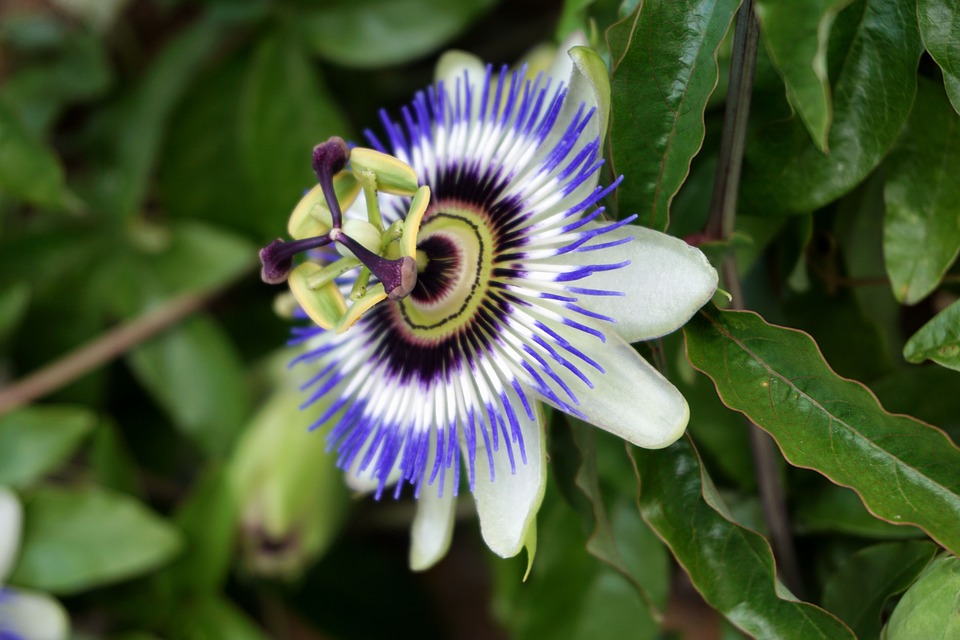 flower-1643154_960_720