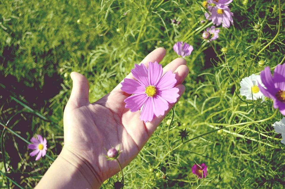 flower-garden-1008668_960_720