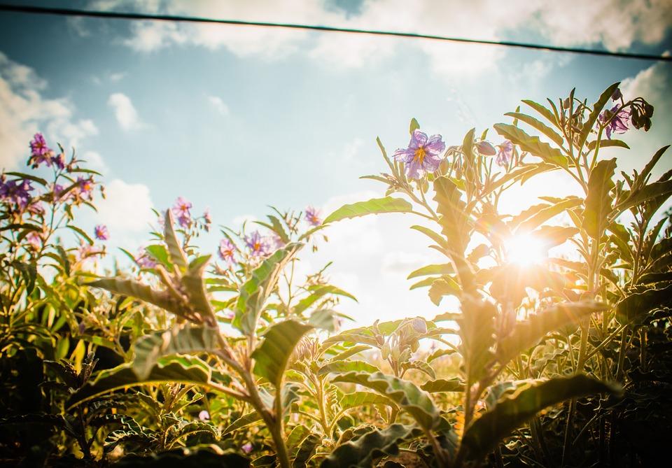 flowers-1000446_960_720