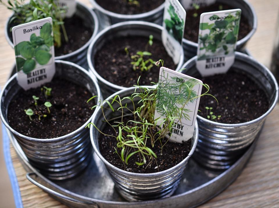 herbs-1309575_960_720