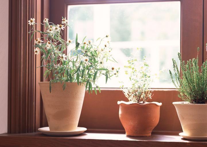 Houseplants sitting on windowsill in the sun