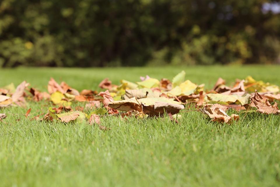 leaves-935669_960_720
