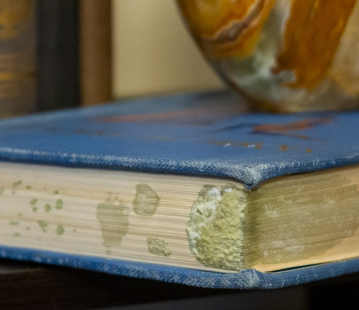 Mouldy book