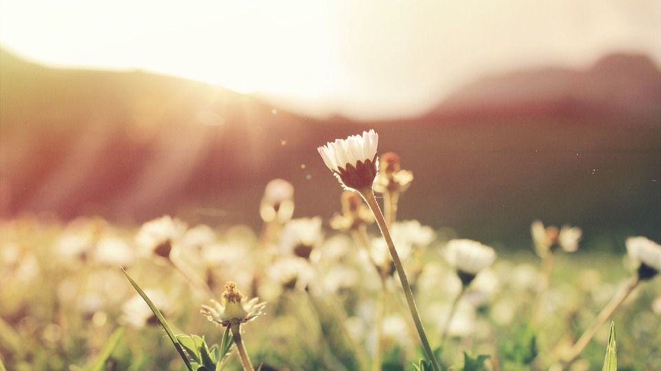 Getting in touch with nature can improve your mental wellbeing.