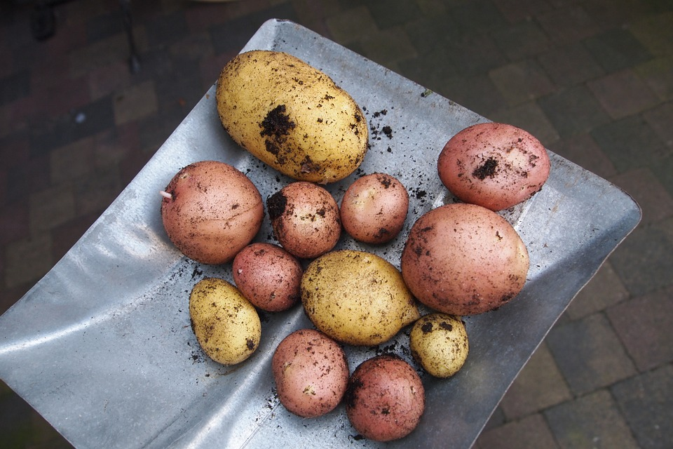 potatoes-913188_960_720