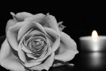 rose-1273727_960_720