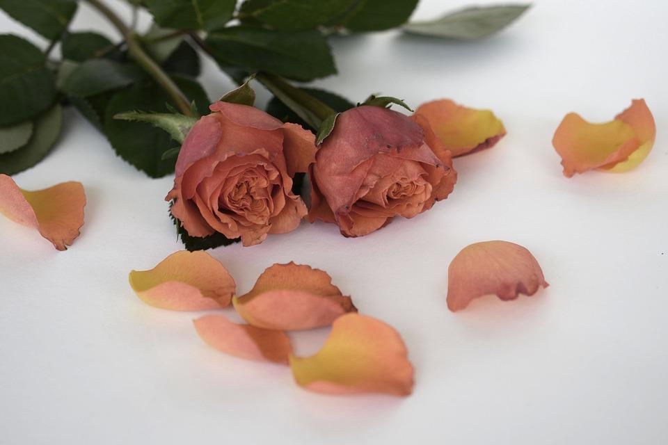 roses-1346668_960_720