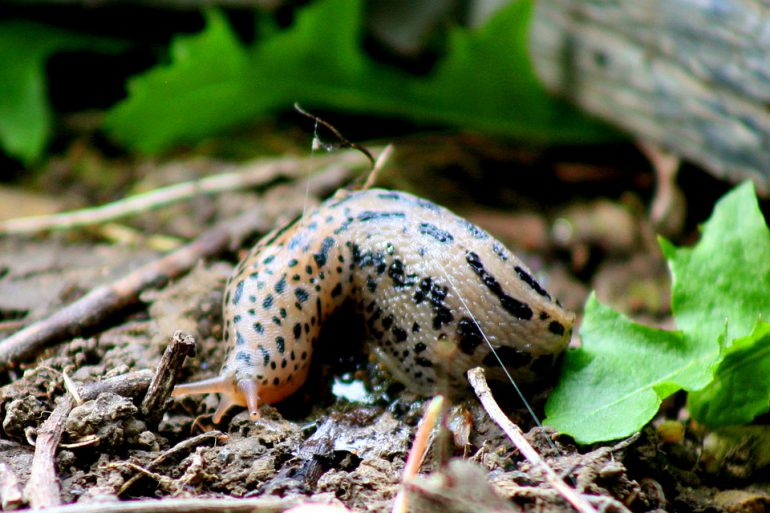 slug-648206_960_720