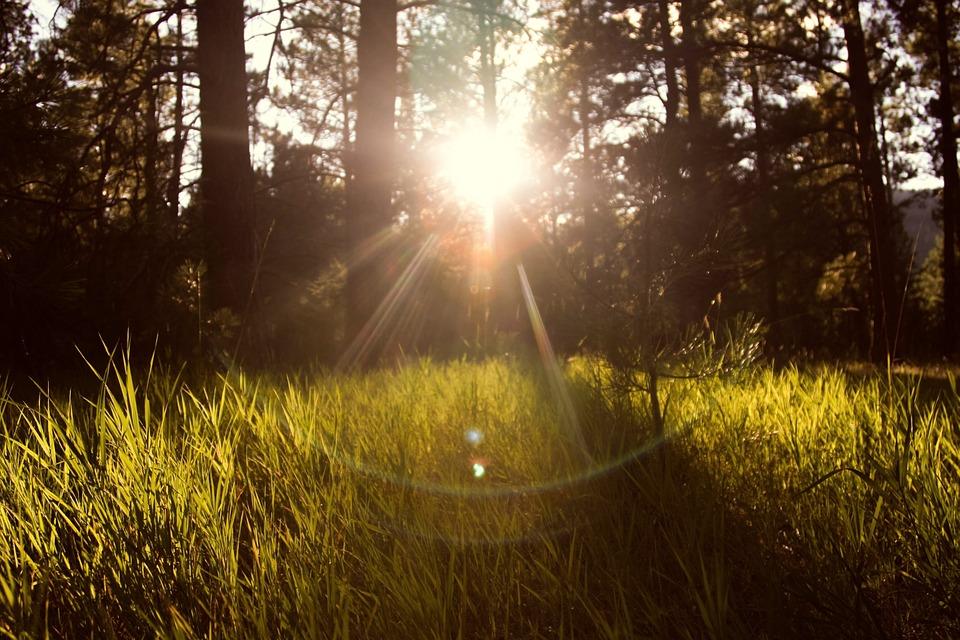 sunlight-867222_960_720