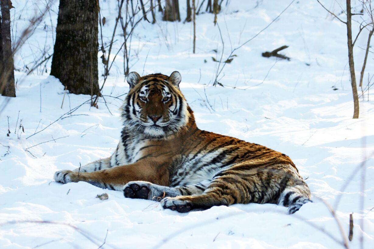 International Tiger Day